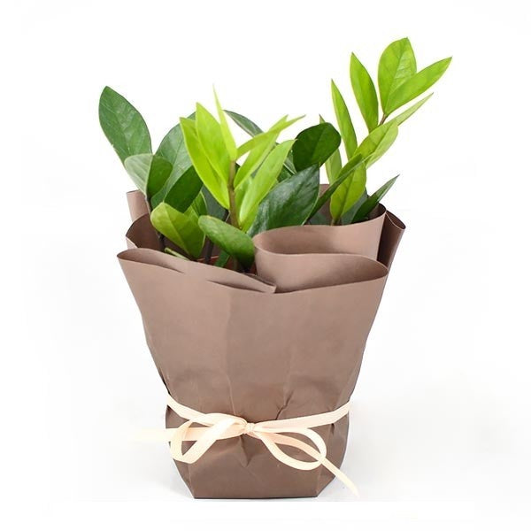 GIFT WRAPPED PLANT