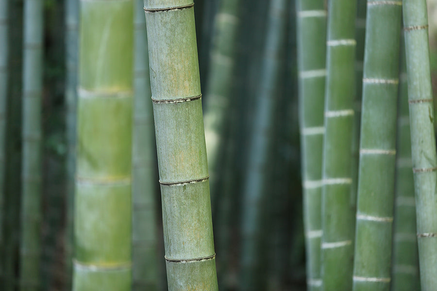 What is Bamboo Fabric?