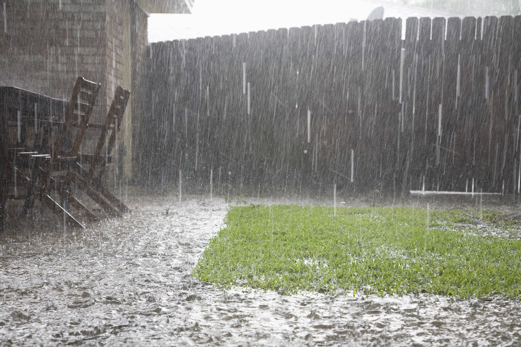 How to Protect a Garden from a Rainstorm