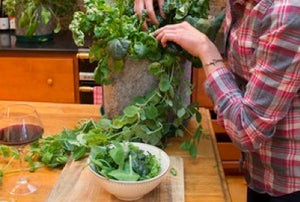 Roots and Shoots Garden Salad Recipe