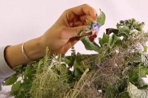 How to Harvest Borage