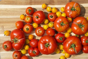 How to Harvest and Store Tomatoes