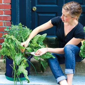 urban gardening is easy with Seedsheet's Custom container gardens