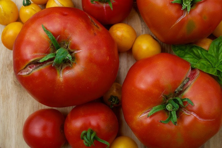 tricks of the tomato trade troubleshooting how to grow the best