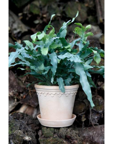 18cm Copenhagen Clay Plant Pot | By Bergs Potters