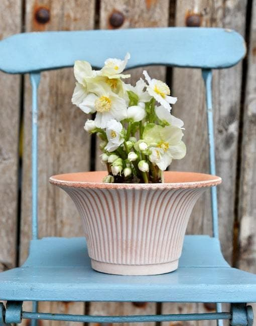 25cm Daisy Clay Plant Pot | By Bergs Potters - uBaaHaus