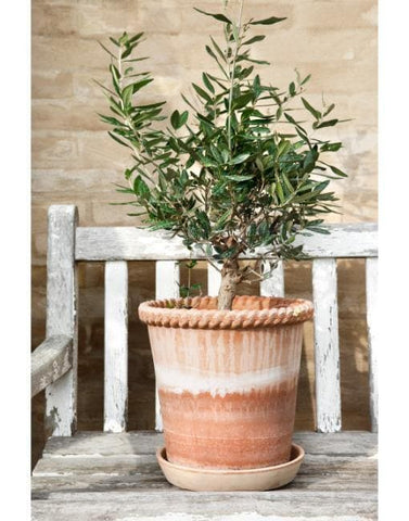 16cm Emelia Clay Plant Pot | By Bergs Potters