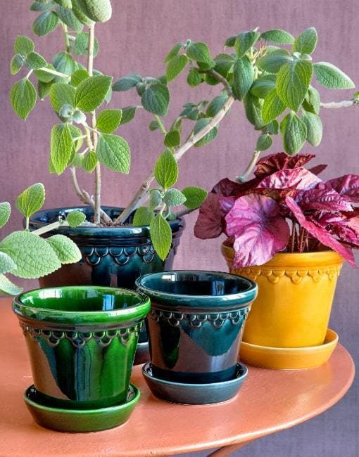 10cm Glazed Copenhagen Clay Plant Pot | By Bergs Potters - uBaaHaus