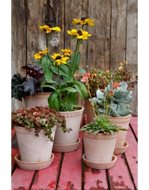 18cm Helena Clay Plant Pot | By Bergs Potters