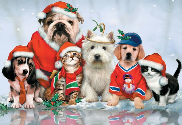 Christmas Card - Dogs and Cats Celebrate Christmas