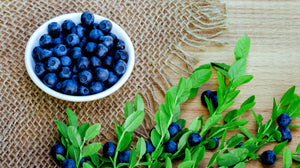 Bilberries in a Bowl