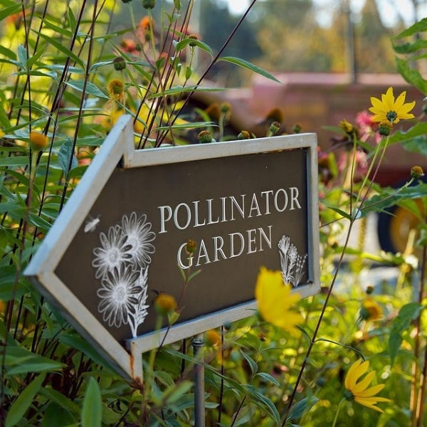 Support pollinators with wildflowers