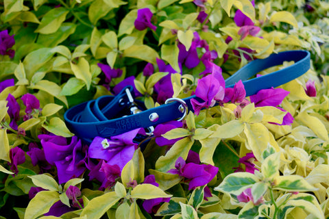 Intertidal Collection™ Skinny Leash