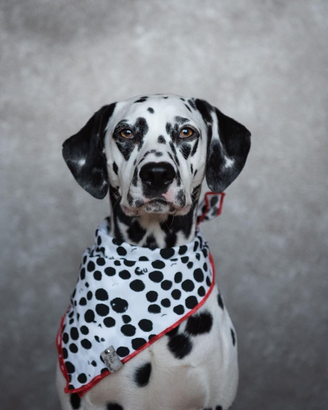 Spot Bandana - The Moxie Collection