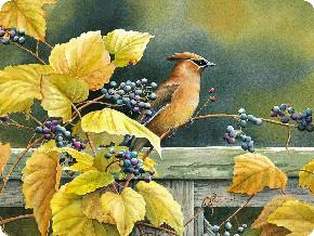Tuftop Tempered Glass Kitchen Board, Artist Collection - Cedar Waxwing Medi