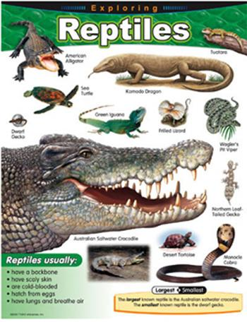 Learning Chart - Exploring Reptiles