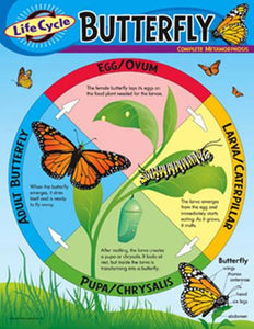 Learning Chart - Life Cycle Of A Butterfly