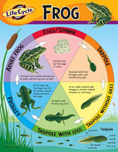 Learning Chart - Life Cycle Of A Frog