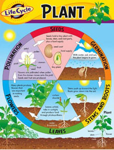 Learning Chart - Life Cycle Of A Plant