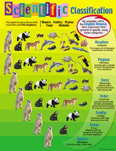 Learning Chart - Scientific Classification