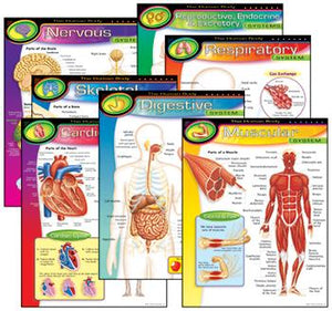 Learning Charts Combo Pack - The Human Body
