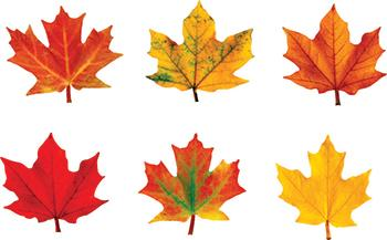 Mini Accents Variety Pack - Maple Leaves