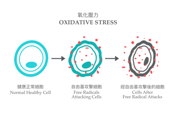 Oxidative Stress | Ambrosia | Hong Kong