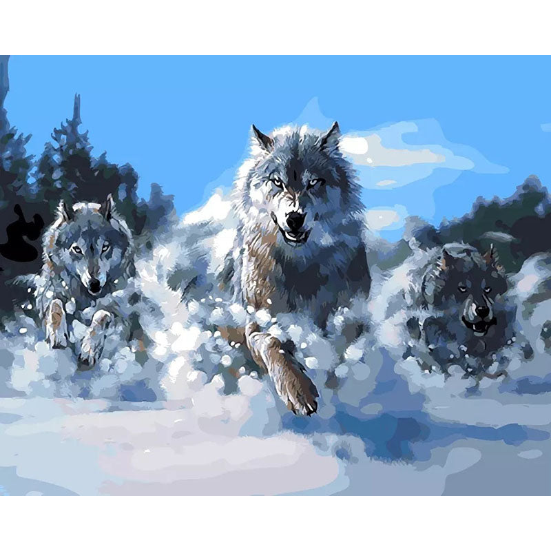 3 Wolves Running in Snow