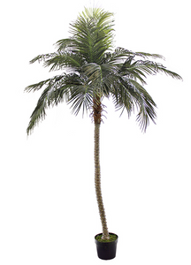 8' Outdoor Phoenix Palm Tree -