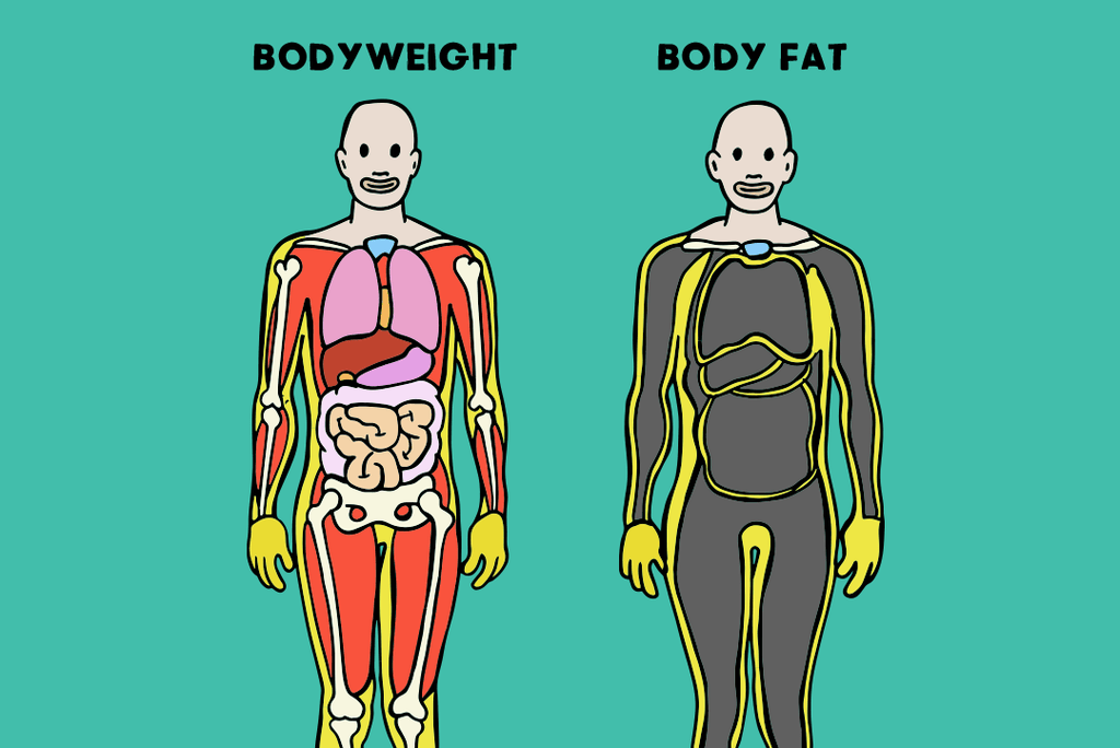 bodyweight vs body fat