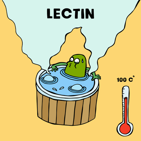 lectin in soy