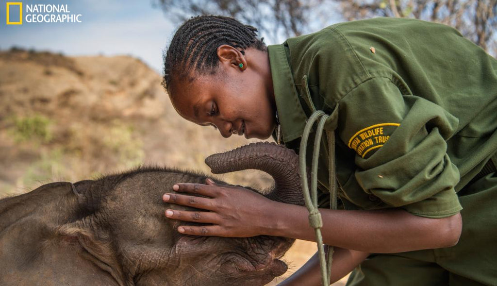 Young woman stroking baby elephant