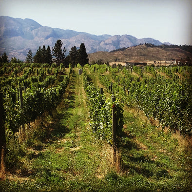 BC's Top Wine Regions
