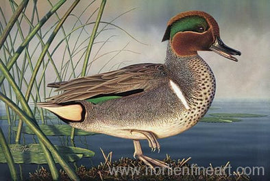 Green-Winged Teal - Original - Originals