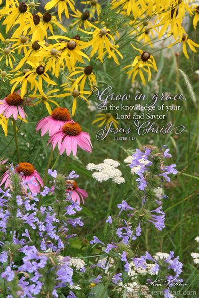 Grow In Grace With Verse - Photography - Photography