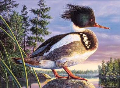 Red Breasted Merganser - Print - Prints & Giclees