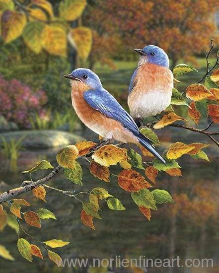 Songbird Bluebirds Print - Art Print