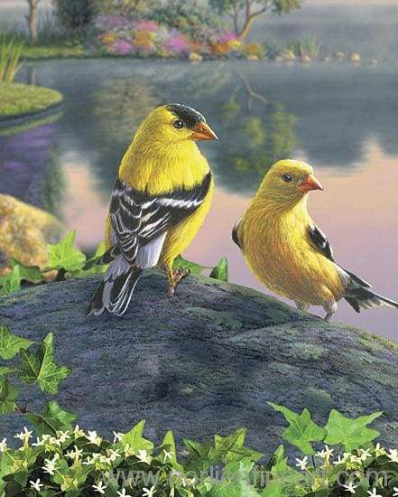 Songbird Goldfinches Print - Art Print