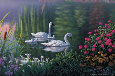 Swan Family - Print - 8 x 12 - Prints & Giclees