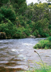 Boiling Billys Camping Guide to Australia. River Picture