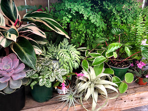 Houseplants 101: Plants and Pets