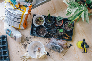6 Expert Tips to Create a DIY Indoor Garden