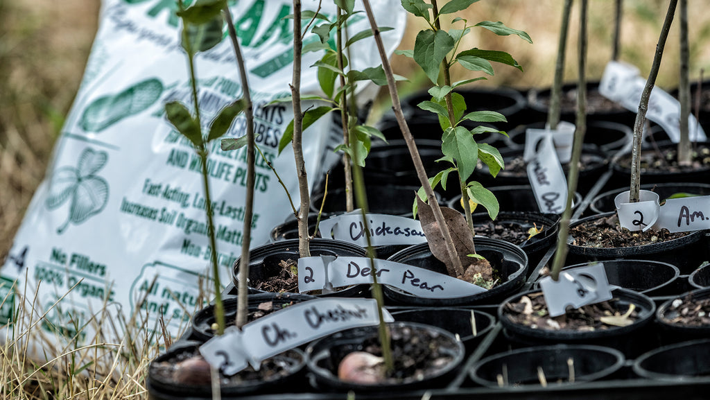 Tips to get your new seedlings through the Summer