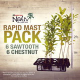Blight Resistant Chestnut / Sawtooth Oak Rapid Mast Package