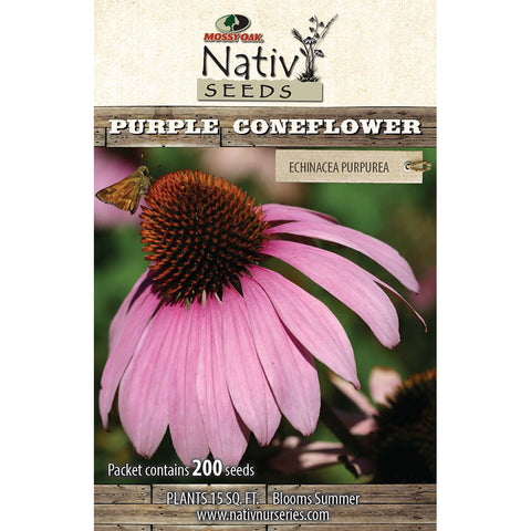 Purple Coneflower (Echinaciea purpurea)