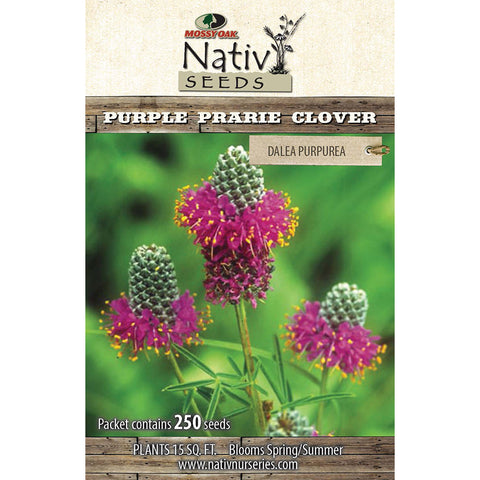 Purple Prarie Clover (Dalea purpurea)