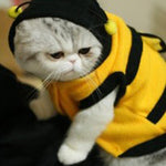 Pet Bee Costume