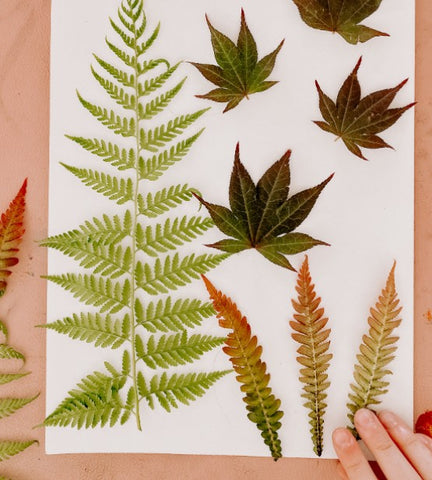 Creative Kids collection of gathered leaves for artworks