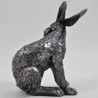 Seated Hare Scratching His Ear