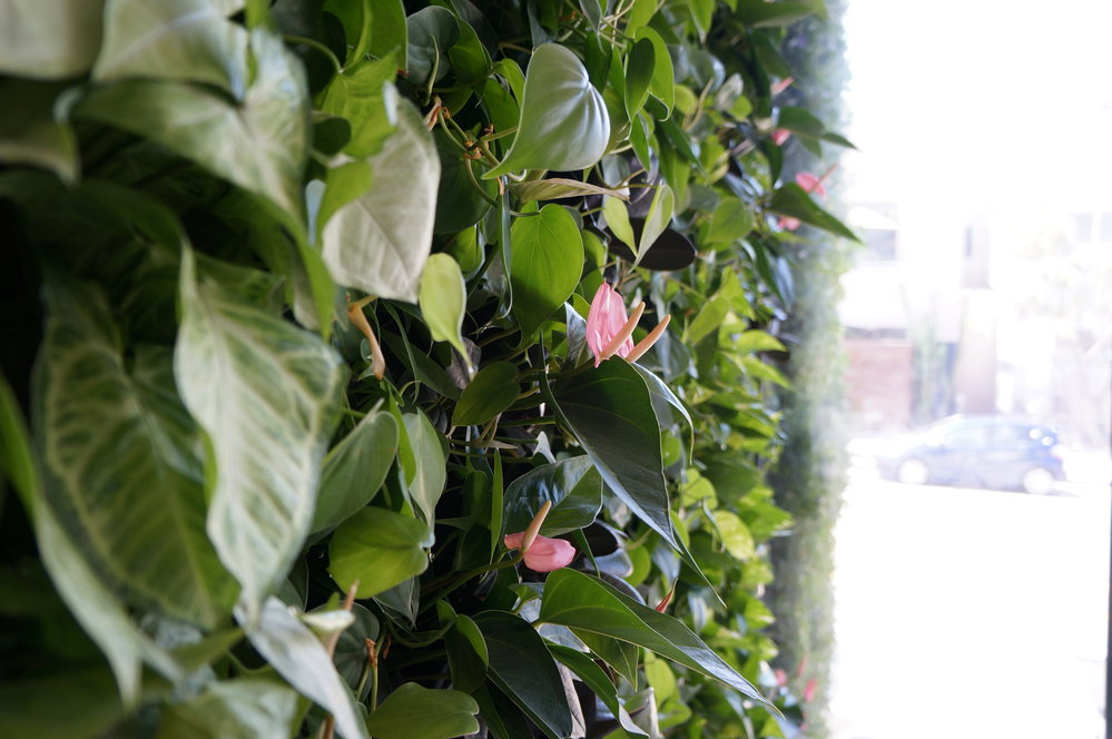 Venice, CA Studio: The Living Wall